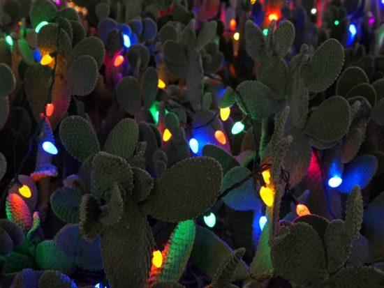 Overal lampjes Ethel M Botanical Cactus Garden