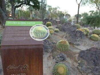 Ethel M Botanical Cactus Garden in Henderson