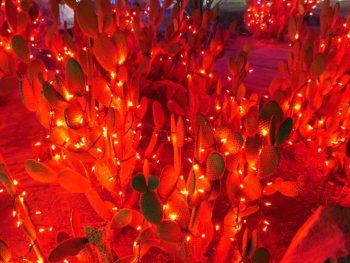 Nog meer lampjes Ethel M Botanical Cactus Garden
