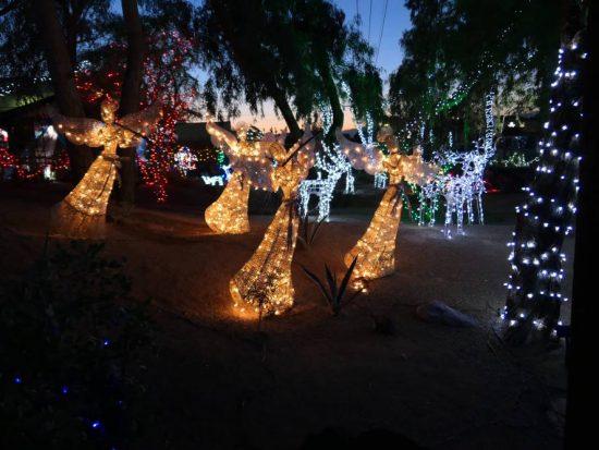 Kerstengelen, M Botanical Cactus Garden