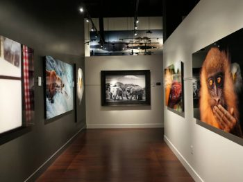 National Geographic Fine Art Galleries