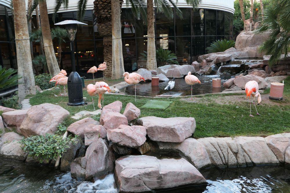 Flamingo's in het Flamingo Hotel